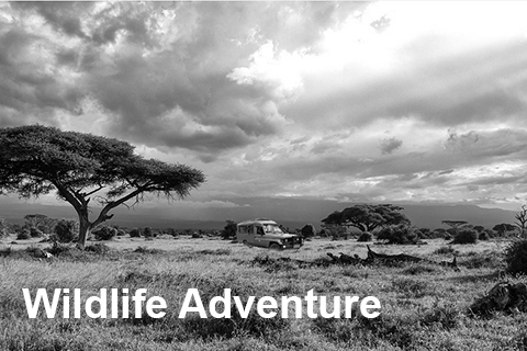 Wildlife & Adventure Safaris